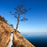 Дерево на склоне :: Анатолий Иргл