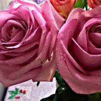 Розы :: Елена Семигина