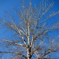 Зимнее небо солнечным днём :: Нина Бутко