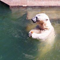 Медвежья радость :: Сергей Царёв