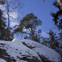 И на камнях растут деревья :: Sergey Lebedev