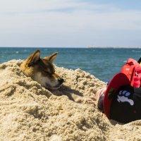 парочка в песке :: Karolina
