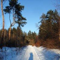 Зимняя дорога :: olgaNikel