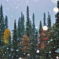 Ранний снег :: Сергей Чиняев