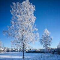 Мороз и солнце! :: Дмитрий Постников