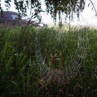 Паутина на двух травинках туманным утром :: Сергей W.Протопопов