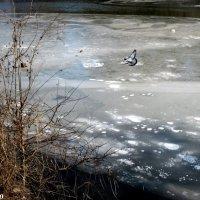 Замёрзшая река :: Нина Бутко
