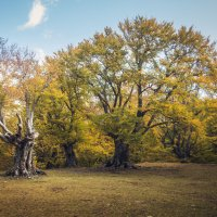 Тайна леса :: Евгений Зинченко