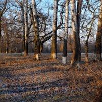 Утро в парке. :: владимир