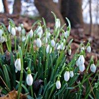 А завтра  - Весна!!!... :: Galina Dzubina
