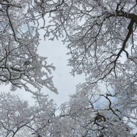 Зимний ажур :: Наталья Джикидзе (Берёзина)