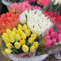 Девочки, весна, весна.... Завтра! :: Александр Скамо