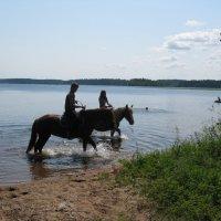 На конях у озера. Прогулка :: Татьяна