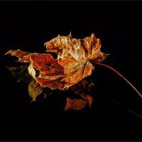 Кленовый лист... :: Александр Никитинский