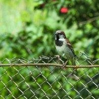 Птичка :: Надюшка Сафиуллина