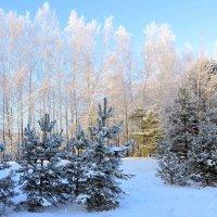 Кружева зимы. :: Hаталья Беклова