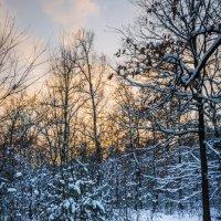 Закат в зимнем лесу :: Андрей Нибылица