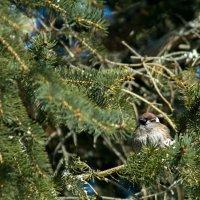 Природа в Белогорье :: Blaga