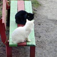 Ну что, друг, весну дождались? :: Татьяна Смоляниченко