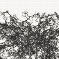 птички на дереве :: Юлия Денискина