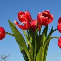 С Первым Днем Весны!!! :: Вера Андреева