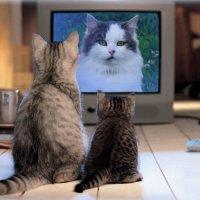 С  Днём кошек..!!! :: Светлана