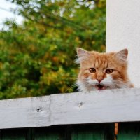Караул - снимают! :: Валентина Данилова