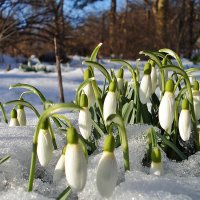 С Первым днем весны :: Лидия (naum.lidiya)
