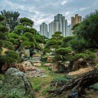 """Там, на неведомых дорожках... (из серии """"Парки Гонконга"""") :: Виктор Льготин"""