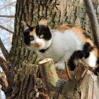 С Днем кошек и с весной! :: Ната Волга