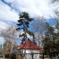 Весна идет.. :: Елена Семигина