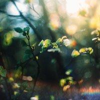 Весна :: Татьяна Афиногенова