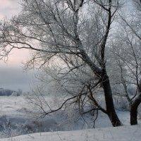 Предчувствуя весеннее тепло... :: Лесо-Вед (Баранов)