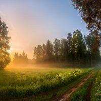 Скоро весенне-летние прогулки по дорожкам в парках. :: Фёдор. Лашков