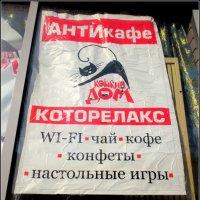 Забавы ростовских кошек :: Нина Бутко