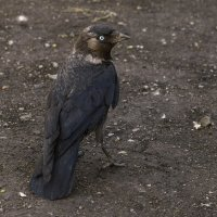 Важная птица :: Дмитрий Костоусов