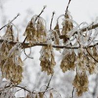 дыхание зимы :: Сергей Гончаров
