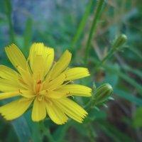 Маленький цветочек :: Виктория Власова