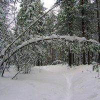 Лес,снег...ещё зима. :: Галина Полина