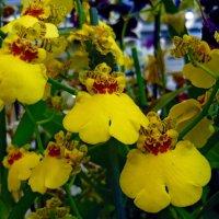 Орхидея :: Вера Щукина