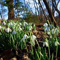 """""""Весна - это время заново вспоминать,   сколько запахов в этом мире!...""""  Людмила Ситко :: Galina Dzubina"""