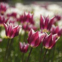 Весна идет :: Татьяна Панчешная