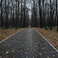 Бесконечная дорога. :: Эдвард Бескровный