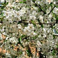 Весна в своей красе.. :: Елена Семигина