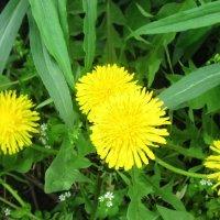 Первые весенние цветы :: татьяна