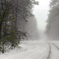 Талым снегом мартовский туман... :: Лесо-Вед (Баранов)
