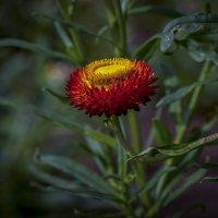 краски цветов :: gribushko грибушко Николай