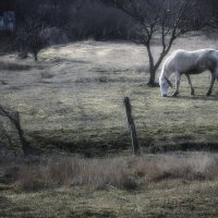 Сияние мартовских пастбищ. :: Анатолий Щербак