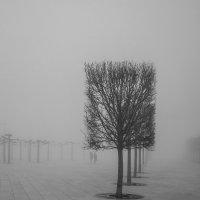 В городе туман :: Андрей