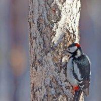 Птица в красной шапочке :: Анатолий Иргл